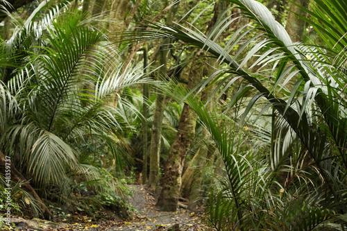 Fototapete urwald  Fototapete Urwald - Busch - Baum - Neuseeland - Pixteria