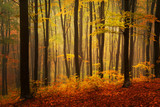 Fototapety Autumnal foggy forest
