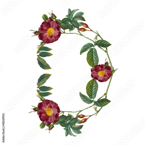 floral alphabet in white background