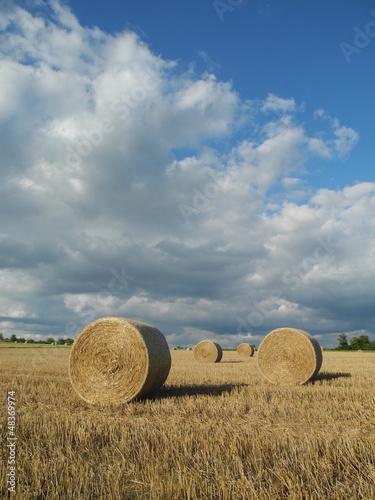 Fototapeten,getreidefeld,feld,ernte,cereal