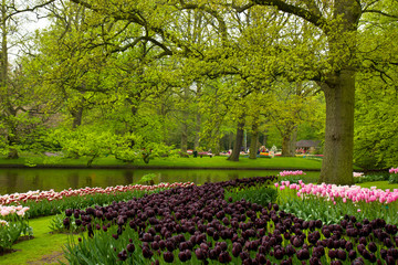 spring garden in Keukenhof, Holland