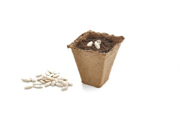 pots biodégradable pour semis