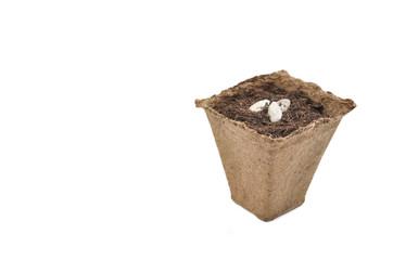 pot biodégradable pour semis