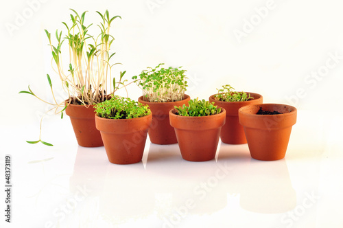 small vases containing seedlings
