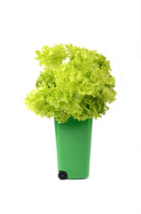 Green plastic recycle bin isolated with green lettuce in it