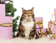 Cat in front of Christmas decorations