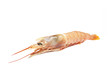 Raw shrimp isolated