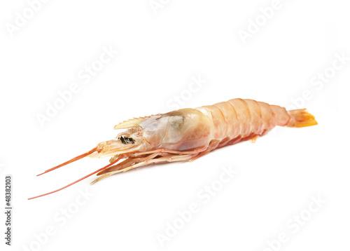 Raw shrimp isolated