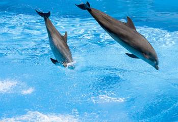 delfini saltano nell'acqua