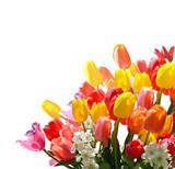 Fototapeta tulipany - narcyz - Zabawa / Występ