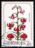 Postage stamp Hungary 1985 Turk's Cap Lily, Flower poster