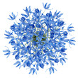 top view of blue flowers in vase isolated on white background