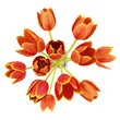 top view bouquet of orange tulips in vase isolated on white