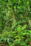 Fototapeta uroda - jasny - Dziki pejzaż