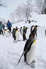 Penguin - snow walking
