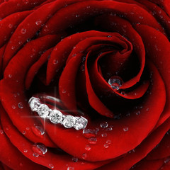 Red rose with diamond ring closeup