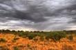 Outback Scenery, Northern Territory, Australia