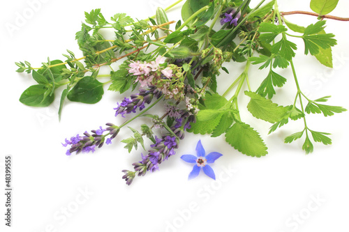 Aromatic fresh herbs