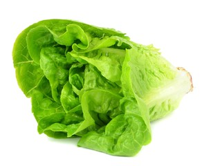 A head of Lettuce on a white background