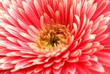 Fototapeta Blisko - W górę - Kwiat