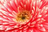 Fototapete Schließen - Auf - Blume