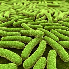 Bakterien - 3D Illustration
