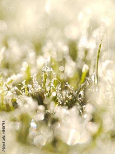 grass frost