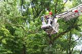 ścinanie gałęzi przez straż - 48417359