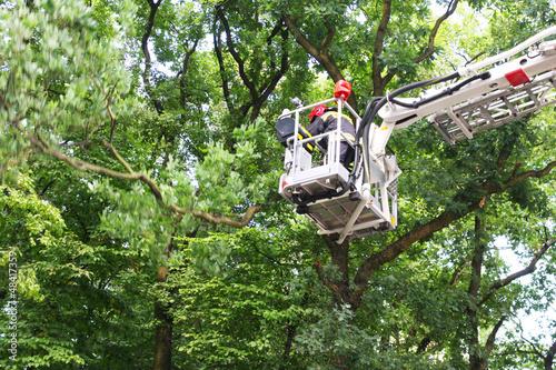 ścinanie gałęzi przez straż