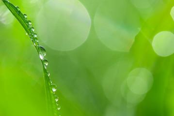 Dew on lush green grass