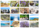 African wild animals collage, fauna, natural themed background poster