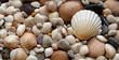 Leinwandbild Motiv Sea Shells Seashells! - scallop and assorted shells / pebbles