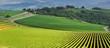 Vista panoramica di un vigneto nella verde   campagna toscana