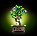 Bonsai isolated on Black background
