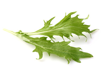 Fresh leaves of arugula