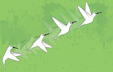 Birds movement