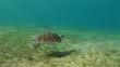 Unterwasserwelt: Meeresschildkröten, Abu Dabbab, Rotes Meer