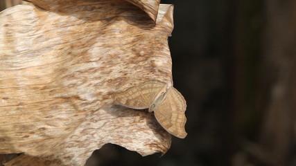 Butterfly wings are spread