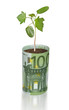 Sapling growing from euro bill