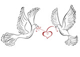 Two love dove with heart shaped