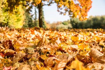 herbstblätter im park