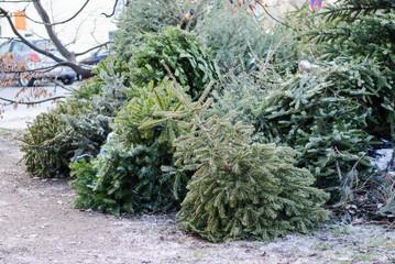 Weihnachtsbaum entsorgt