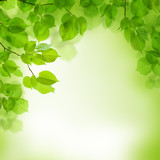 Green leaves border, abstract background - 48437792