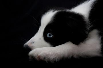 black, white, blue eye
