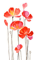 Watercolor painting poppies 1