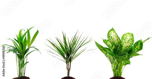 Papiers peints Palmier Verschiedene Zimmerpflanzen
