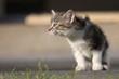 Katzenwelpe schnuppert