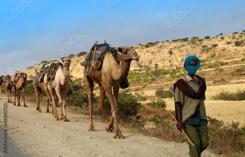Fototapeten,ethiopia,afrika,tier,unkultiviert