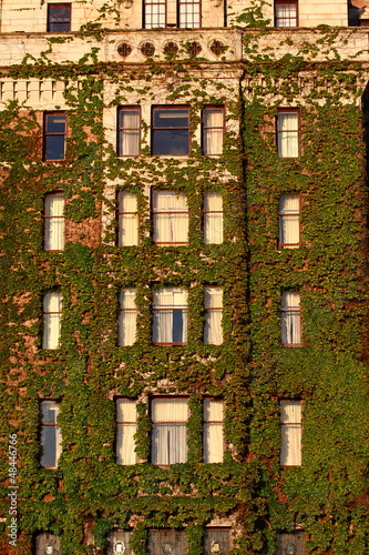 Windows of Hotel Covered in vines