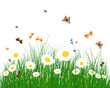 Color meadow
